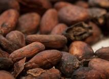 cacao alzheimer