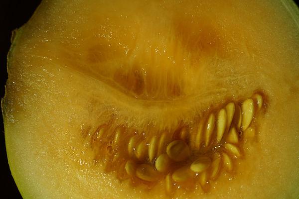 vitaminas del melón