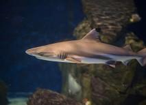 para qué sirve el cartílago de tiburón