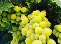 uvas calorías