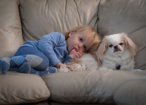 hipoglucemia sintomas perros diabetes