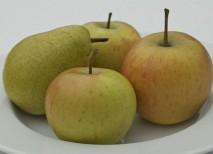 cuerpo pera cuerpo manzana