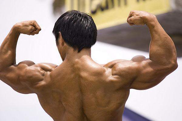 catabolismo muscular