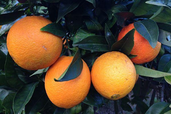 calorias naranja