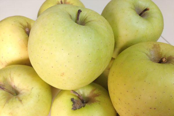 propiedades manzana