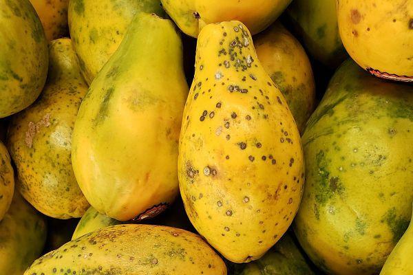 calorías papaya